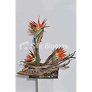 Rustic Birds of Paradise Driftwood Table Vase Display 57