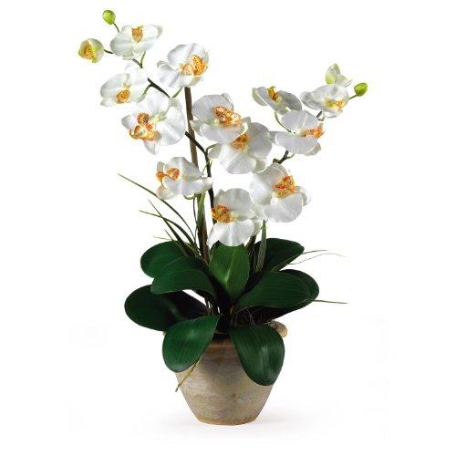 New Double Stem Phalaenopsis Silk Orchid Arrangement Cream