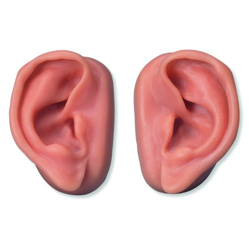 3B Scientific N16 Acupuncture Ears Model Set for 10 Students, 3.7'' x 2.4'' x 1.6'' Size by 3B Scientific (Image #1)