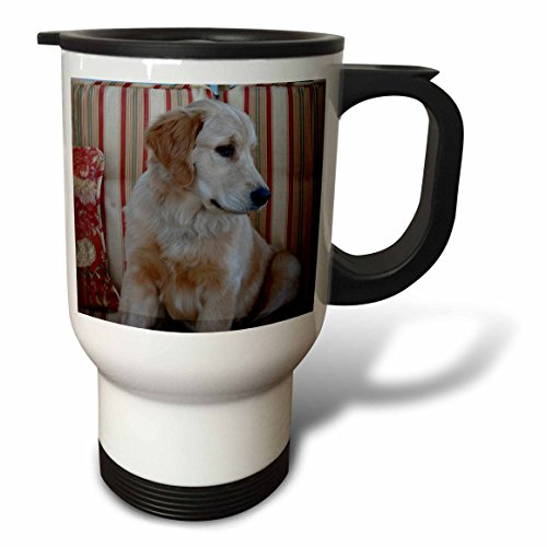 (3dRose Golden Retriever Travel Mug,)