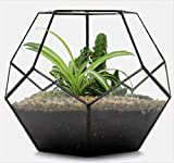Asvert Geometric Terrarium Handmade Glass Flower Pot Hexagonal Football Shape Indoor Plant Succulents Display Container DIY Decoration Top Opening Window Table Bonsai Plant Bowls Holder