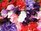 Sweet Pea-royal Mix (Lathyrus Odoratus) Old Fashioned Standard Large Frilly Blooms with Gorgeous Colors Fragrant and Abundant the Best Sweet Pea for Cut Flowers-approximately 50 Seeds