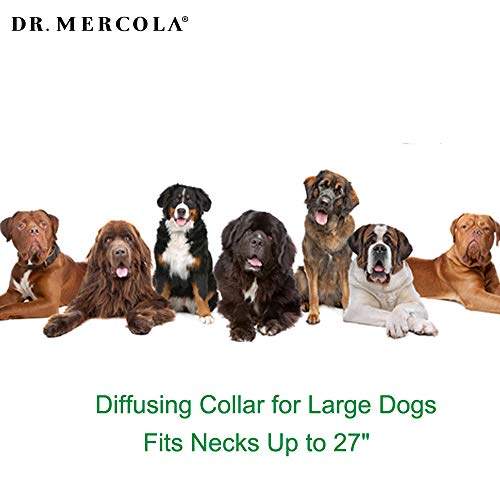 Dr. Mercola Herbal Repellent Collar For Large Dogs with Natural Active Ingredients, Long-lasting Flea Prevention - Odorless, Safe and Waterproof Flea Collars Effective Up To 4 Months, Necks up to 27'' by Dr. Mercola (Image #4)'