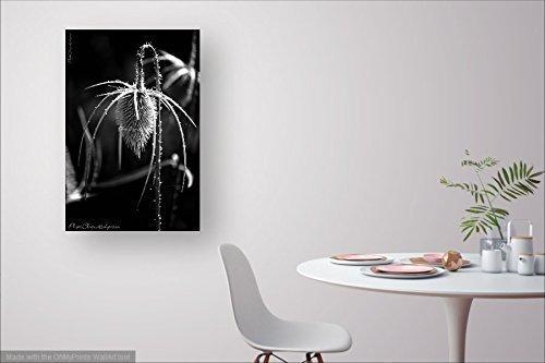 Fine Art Photography \u2022 Nature \u2022 Bowed Head \u2022 Graceful Stem /& Seed Head of Wild Teasel \u2022 Rustic \u2022 High Res Print