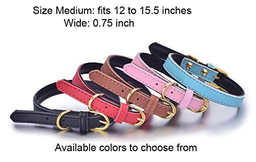 Pets Friends Fur Ever Basic Classic Padded Leather Pet Collars for Dog Puppy Small Medium Large Dogs