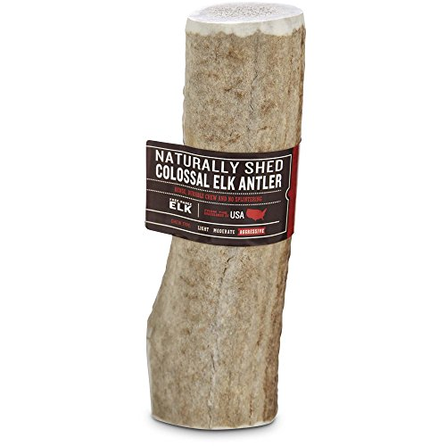Good Lovin Naturally Shed Colossal Elk Antler Dog Chew, 10 oz.