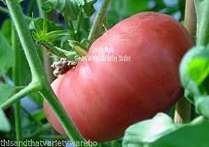 Ponderosa Heirloom Tomato Seeds Non GMO Beefsteak Old Fashioned Flavor 15-20oz