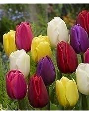 Set Bulbi Tulipano Misti Varietà Triumph Olandese Fiori Perenni Da Giardino Profumati Prato Vaso 60 Cm