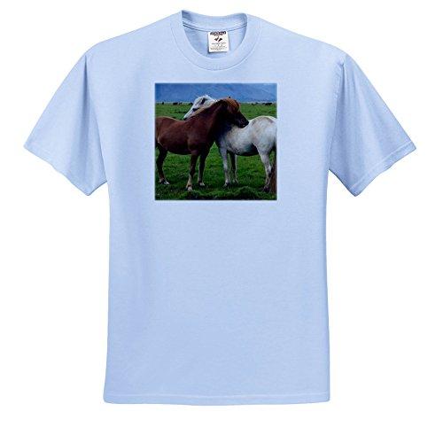 3dRose Danita Delimont - Horses - Iceland, Wild Icelandic Ho