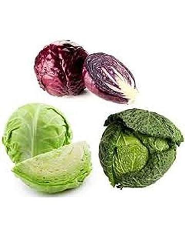 Prodotto in Italia Brassica rapa cymosa CI012 Inception Pro Infinite 4000 C.ca Semi Broccoletto o cima di rapa 60/° riccia S Cavolfiori Marzano In Confezione Originale