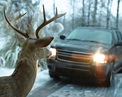 2 Bell Automotive 22-1-01000-8 Black Deer Warning