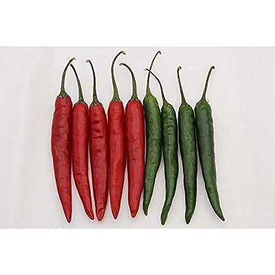 Chilli agri no. 4 Seeds (avg 30-50) Seeds 8 : Garden & Outdoor