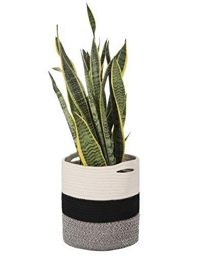 (Woven Cotton Rope Modern Plant Basket for 10