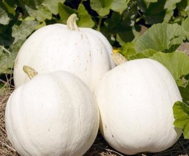 David's Garden Seeds Pumpkin Casper DPUM122 (White) 25 Heirloom Seeds
