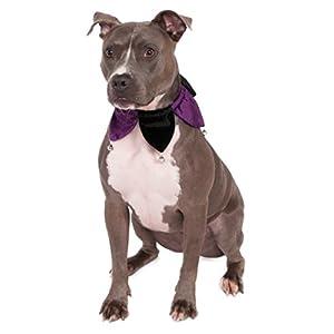 Rubies Costume Velvet Jester Collar Pet Costume, Medium/Large
