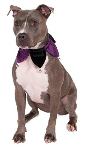Rubie's Velvet Jester Collar Pet Costume, Medium/Large, Multicolor]()