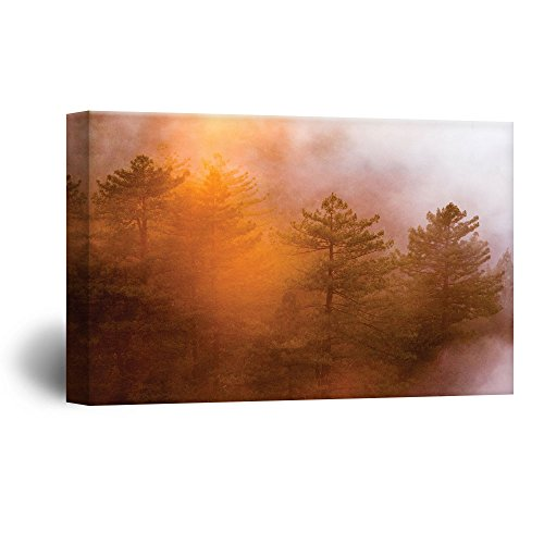 Red Pine Tree Forest with Fog in Autumn Gallery