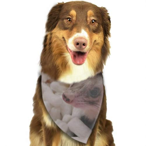 USTON Dog Bandana Triangle Bibs Baby Ferret Bright Coloured Scarfs Accessories for Pet Cats and Baby Puppies
