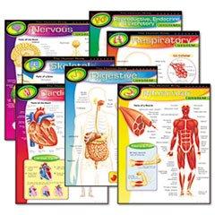 Trend Enterprises T-38913 Chart Pk The Human Body 7/Pk 17X22 Gr 5-8 ()
