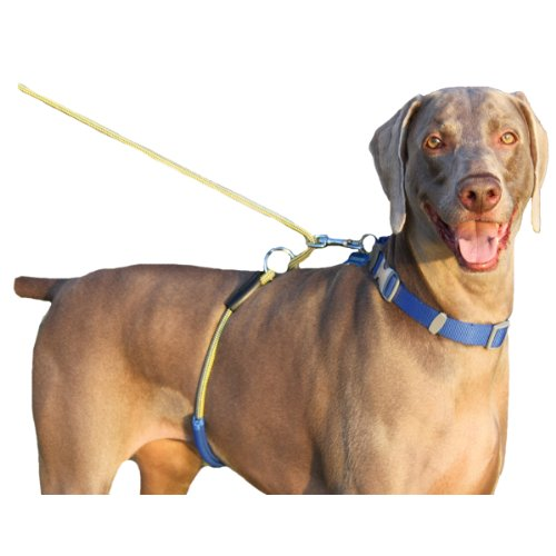 Paws Aboard Monster Walker Anti No Pull Large Dog Harness/Leash Blue/Yellow, My Pet Supplies