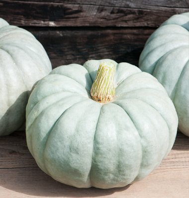 David's Garden Seeds Pumpkin Jarrahdale Large D3150 (Green) 25 Open Pollinated Seeds
