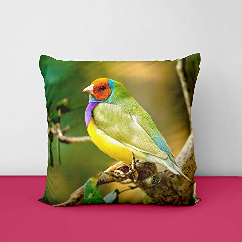 416sTOAq2HL Lady Bird Gouldian Finch Square Design Printed Cushion Cover