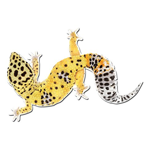 Dark Spark Decals Adorable Leopard Gecko Pet Lizard - 4 Inch Full Color Vinyl Decal for Indoor or Outdoor use, Cars, Laptops, Décor, Windows, and More
