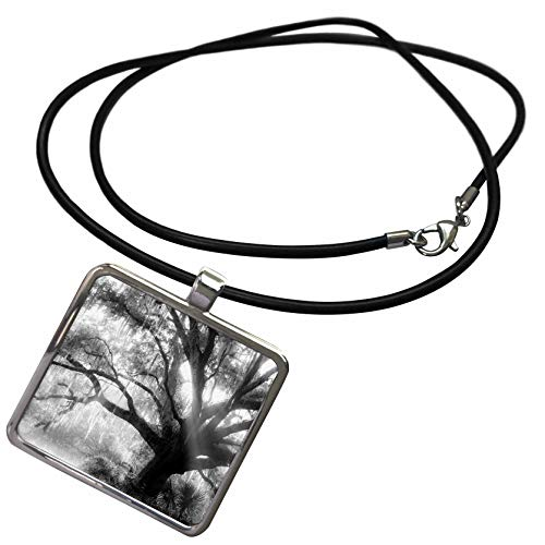 (3dRose Danita Delimont - Trees - Beautiful Southern Live Oak Tree, Quercus Virginiana, Central Florida. - Necklace with Rectangle Pendant)
