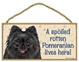 (SJT61992) A spoiled rotten Pomeranian (Black) lives here wood sign plaque 5