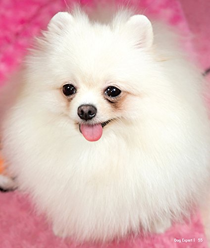 Buy Pomeranian Dog Expert Book Online At Low Prices In India