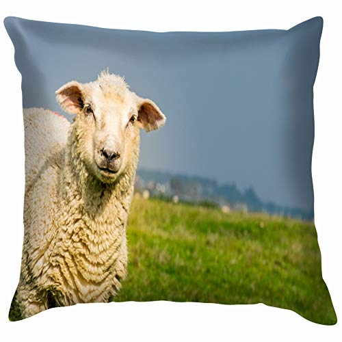 Romney Marsh Sheep On Marshland Animals Wildlife Parks Outdoor Throw Pillows Covers Accent Home Sofa Cushion Cover Pillowcase Gift Decorative 26X26 Inch]()