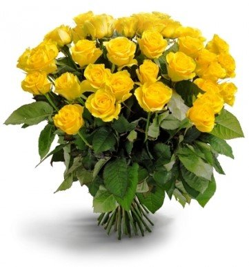 100 Fresh Yellow Roses | 50 cm. long (20'') by FarmDirect