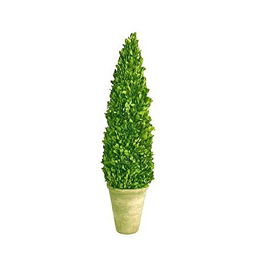 Mills Floral Company Box Cone Topiary, Small, 16'' by Mills Floral