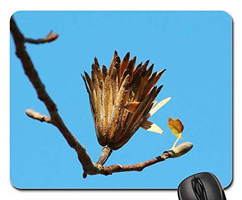 Mouse Pad - Poplar Seed Tulip Poplar Last Stage Seed Pod Flora