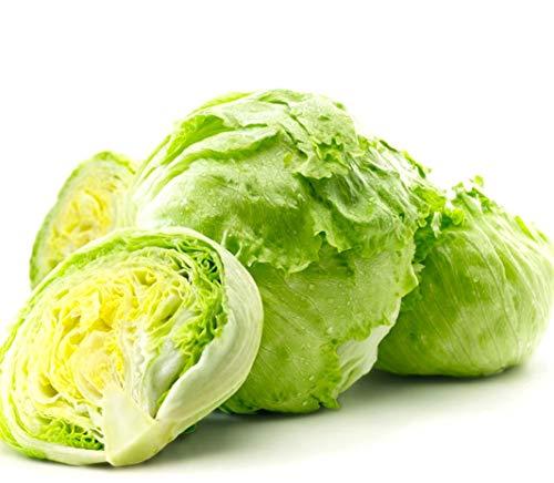 Iceberg Head Lettuce for Microgreens or The Garden #302 (1600+ Seeds, or 2 Grams)