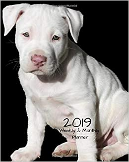 2019 Weekly And Monthly Planner White Pitbull Pup Daily Organizer