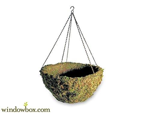 (12in. Windsor Woodlands Moss Hanging Basket - Green)