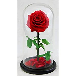 Preserved Rose Never Withered Roses Flower in Glass Dome, Gift for Valentine's Day Anniversary Birthday Mother's Day 114