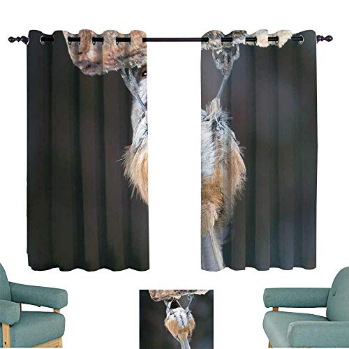 WinfreyDecor Curtain for Kids Mésange à tête Brune 70%-80% Light Shading, 2 Panels,55