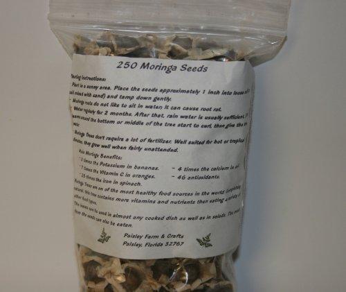 2.5 oz (Apx 250) Moringa Seeds - Paisley Farm and Crafts