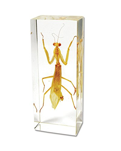 - Praying Mantis Paperweight (4.25