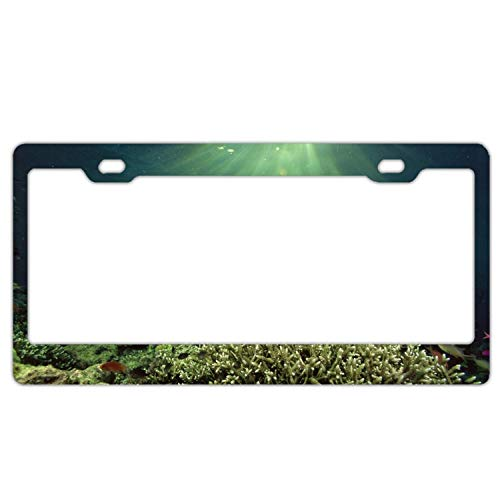 New Cool card License Plate Auto Car Tag Car Tags Animal Fish Underwater Sea Plant Sunlight Sun3