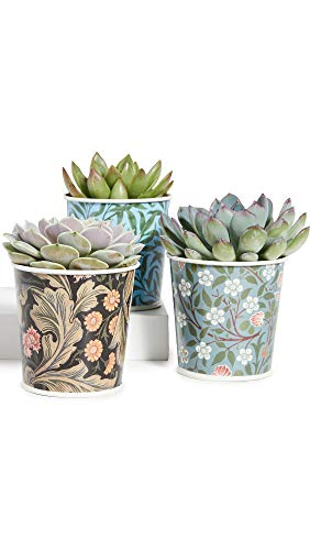 V&A Set of 3 Plant Pots with Tray, Multi (Uk Patio Garden Sets)