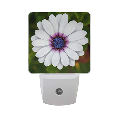 Night Light Cape Daisy Led Light Lamp for Hallway, Kitchen, Bathroom, Bedroom, Stairs, DaylightWhite, Bedroom, Compact