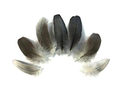 6 Pieces - Natural Black and Gray African Grey Parrot Body Plumage Feathers - (Natural Parrot Green)
