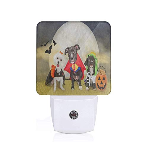 Hipster Puppy Dog Dressed in Halloween Costumes Plug-in Night Light Warm White LED Nightlight with Auto Dusk to Dawn Sensor, Perfect for Kids Room, Hallway, Bedroom, Kitchen, Bathroom -