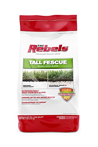 Fescue Blend - Pennington 100526885 Seed the Rebels Tall Fescue Blend Powder Coat, 7 LB, green