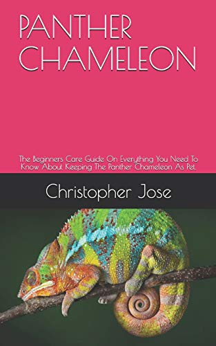 PANTHER CHAMELEON: The Beginners Care Guide On