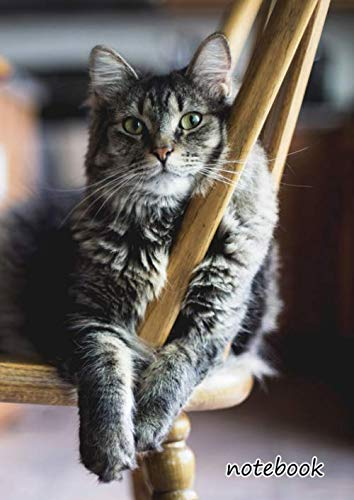 notebook: a4 cute lined journal   wooden table chair furniture dining area cat ()