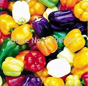 100pcs 6 Color mixed Yellow Puple Red Green Blue White Mix Sweet Bell Hot Pepper Seeds vegetables Paprika